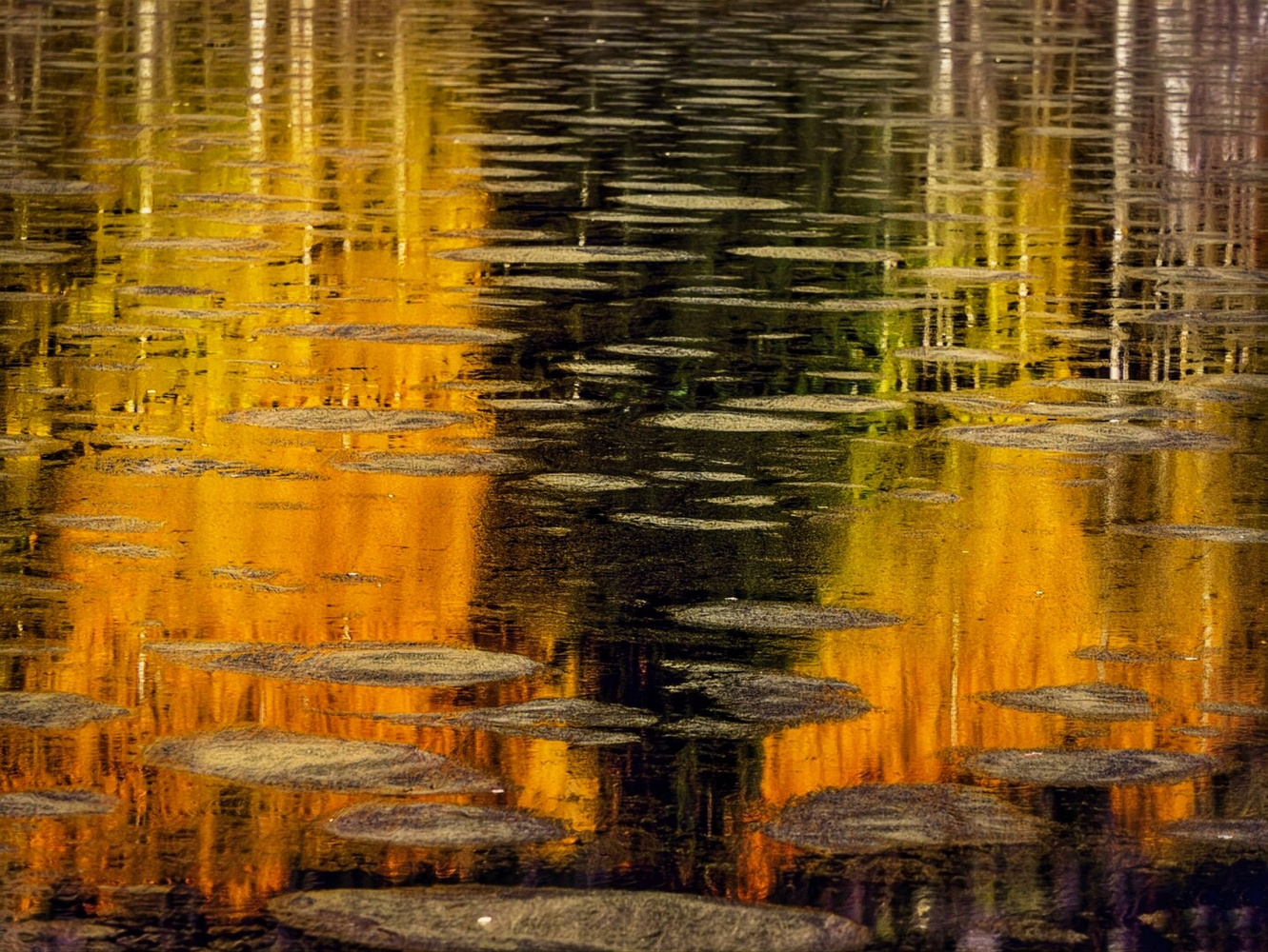 Fall Abstraction by Jamie zartman