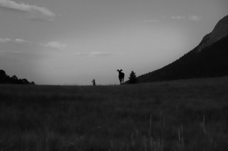 Evening Silhouette by Amanda Messer