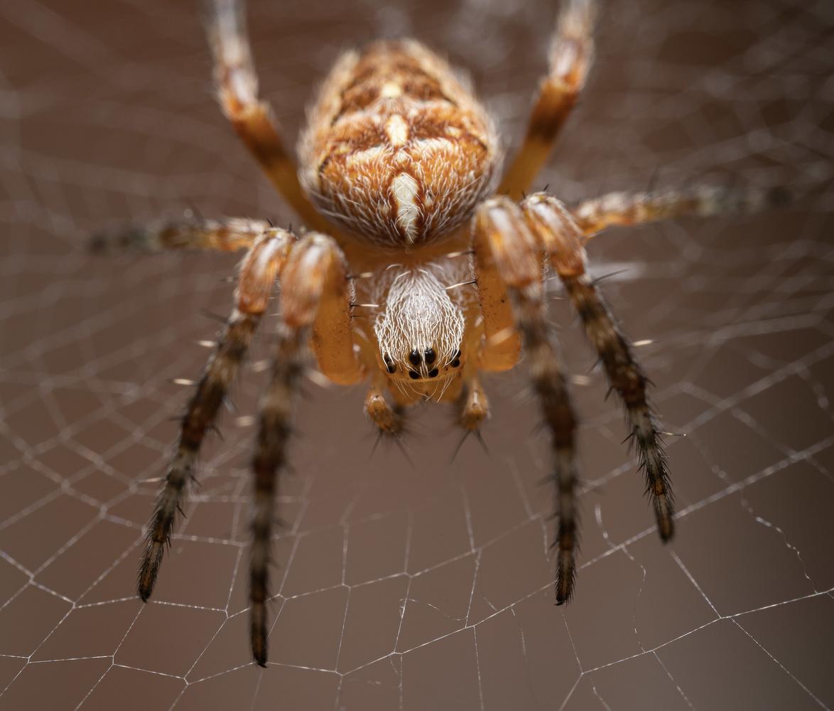 Spider, man! by isaias sanchez