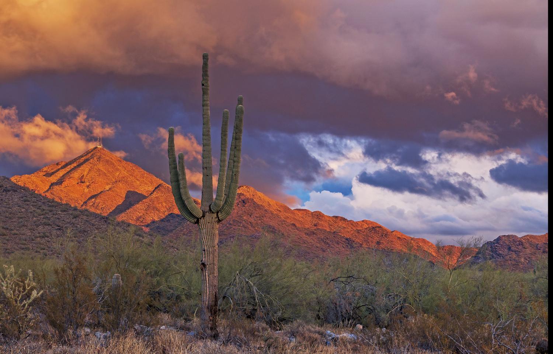 Arizona Desert Sunset Landscape With Saguaro Cactus by Ray Redstone