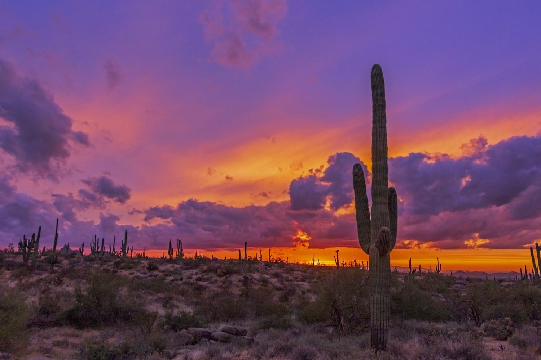 Epic Desert Sunset In Arizona by Ray Redstone