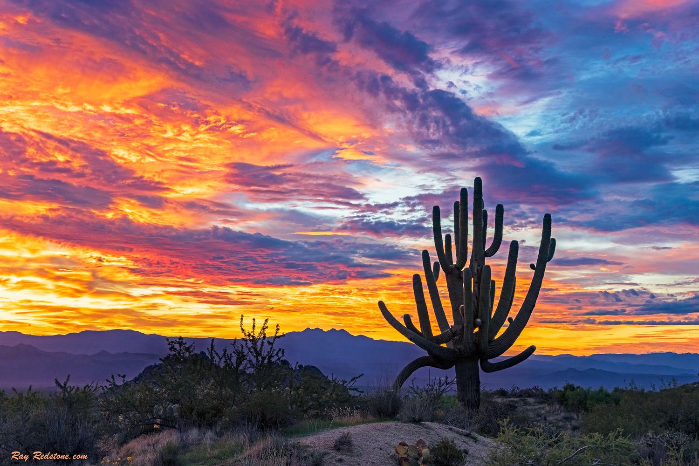 A Colorful Desert Sunrise Landscape In Scottsdale, Arizona by Ray Redstone