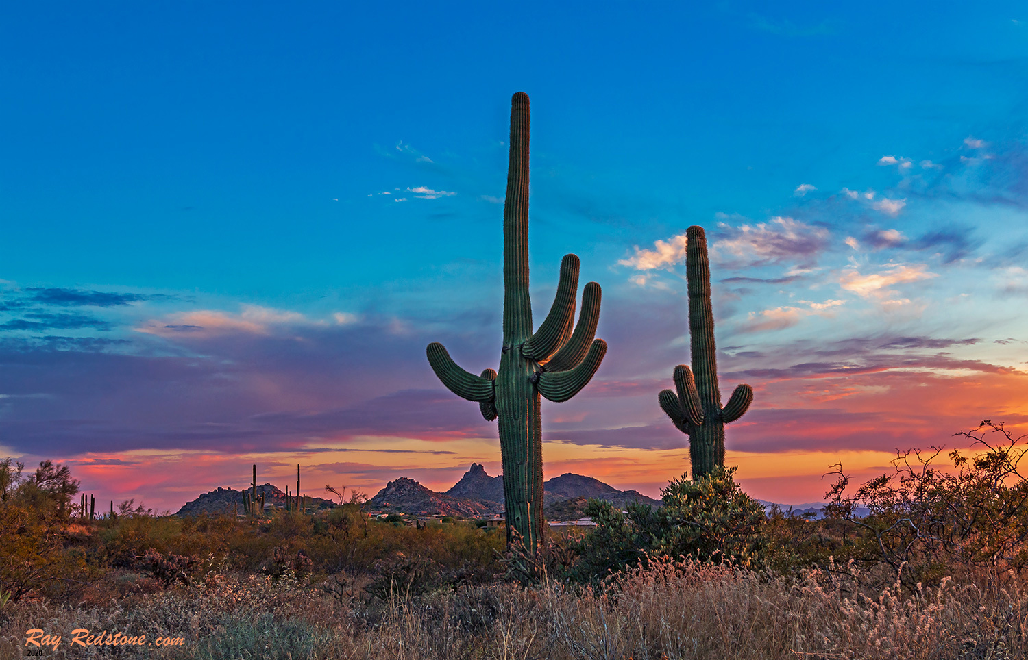 Vibrant AZ Desert Sunset Skies With Cactus by Ray Redstone