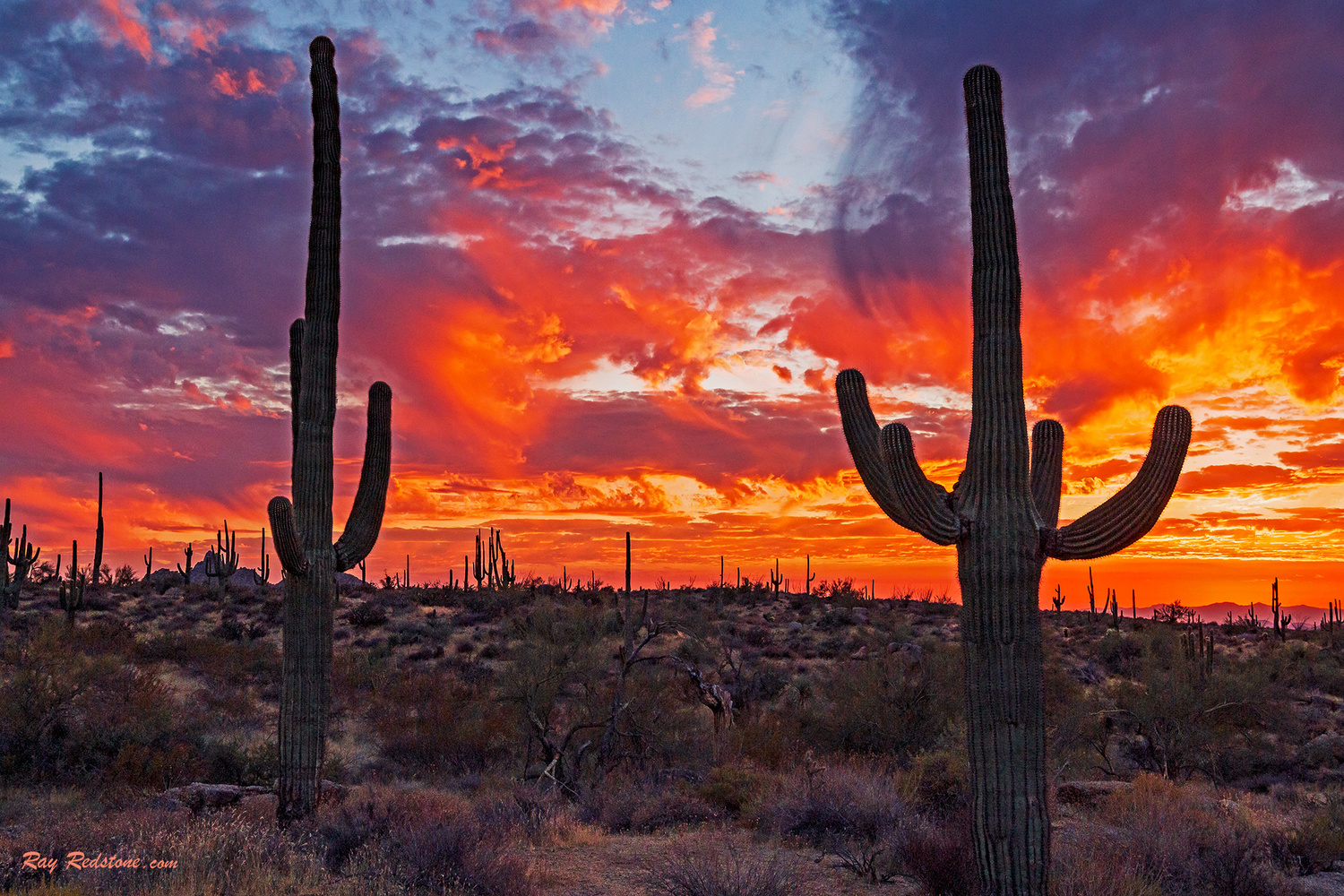 Sky On Fire Sunset In Th Desert Southwest by Ray Redstone
