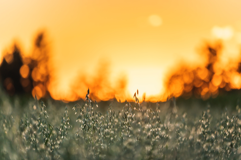 Golden hour by Fabian Wolf