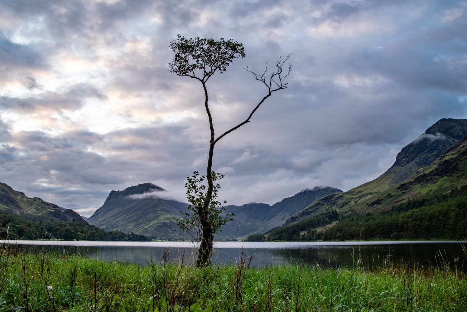 Lone Tree, Lake Buttermere by Gerald Murphy