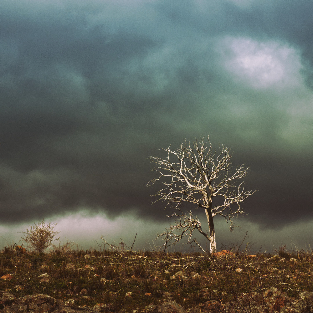 Ghost tree on hill by Paul Easther