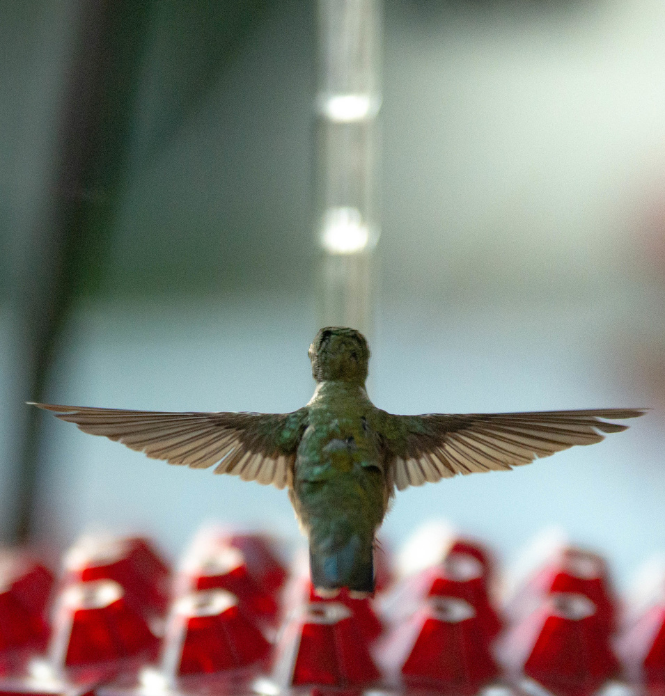 Hummingbird Cross by John Mullens