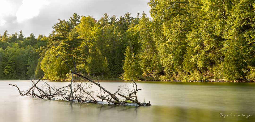 The Floating Tree on Pink Lake by Bryan Carter