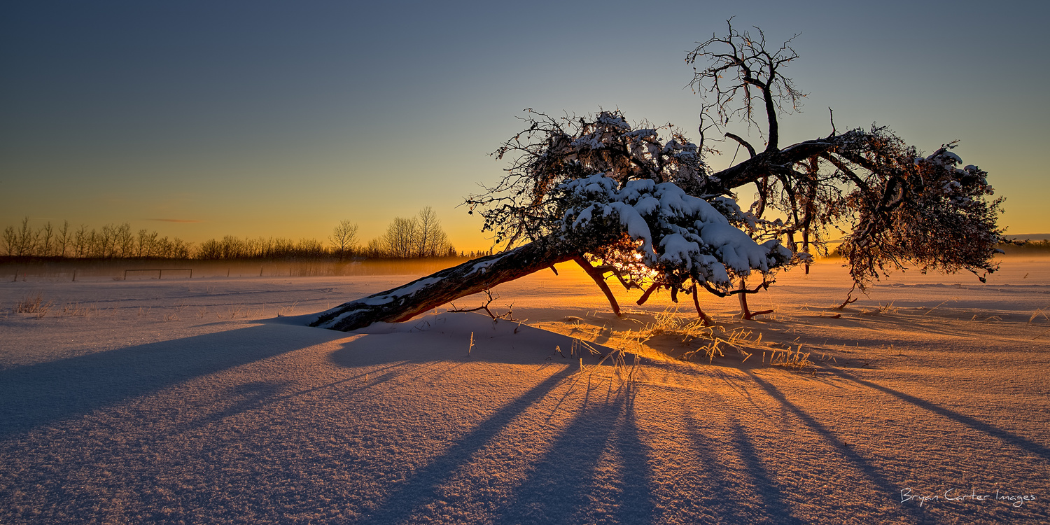 The Snowy Tree by Bryan Carter