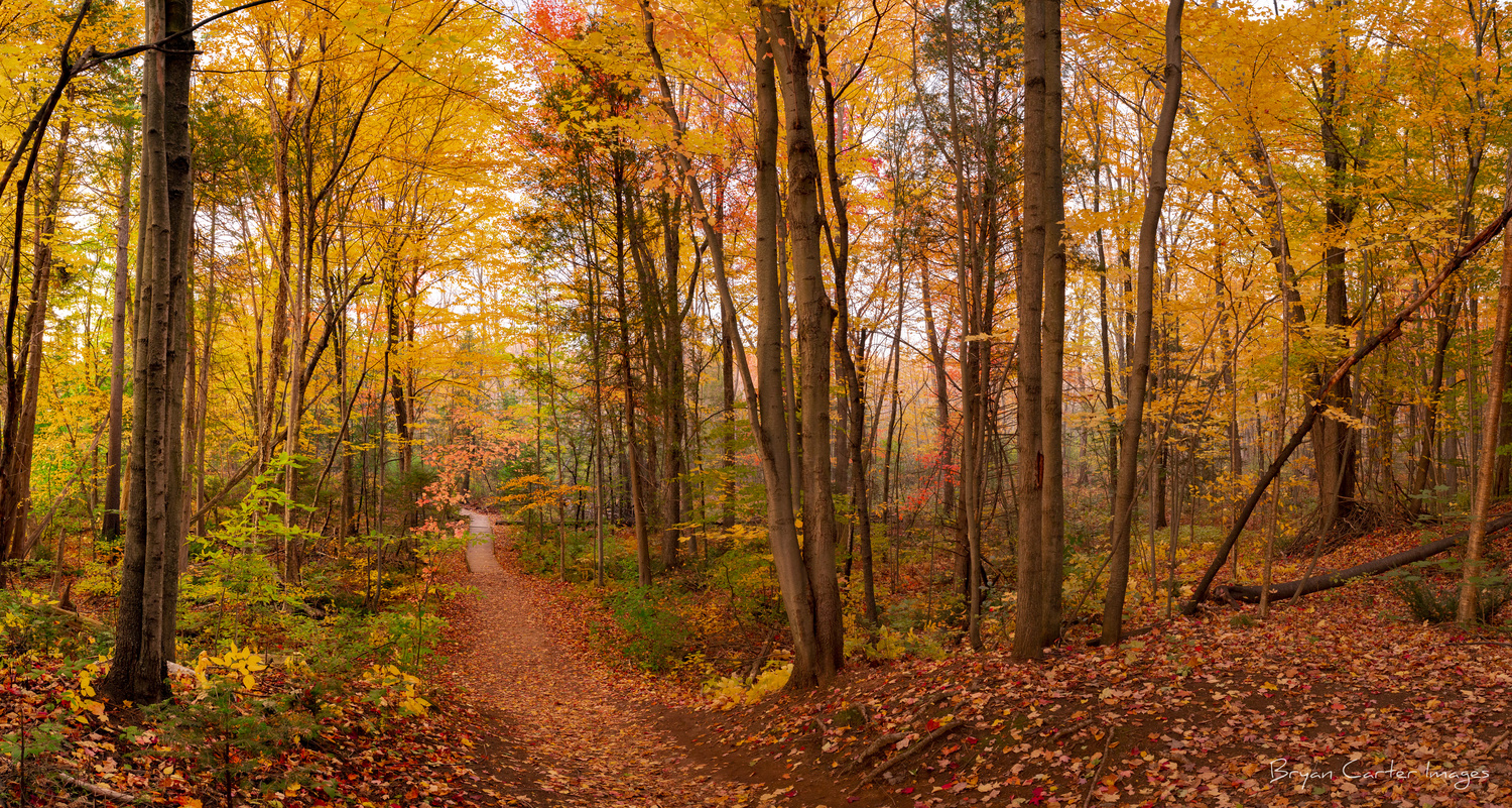 Pinhey Forest Trails by Bryan Carter