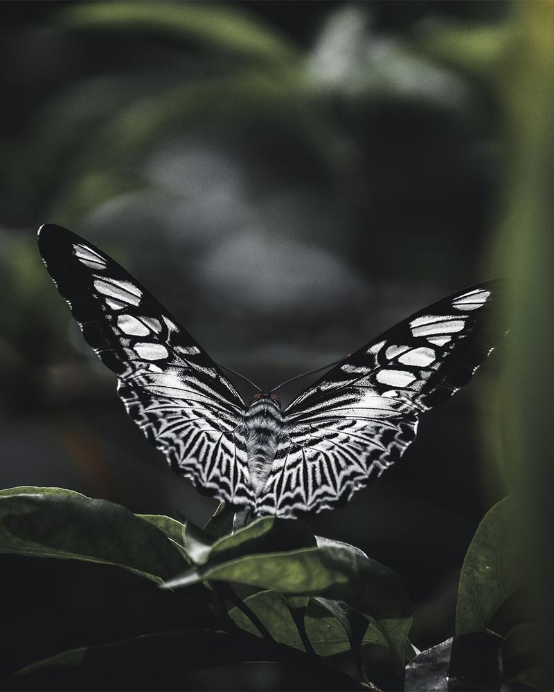 Mosaic Wings by Aruna Kumbukage