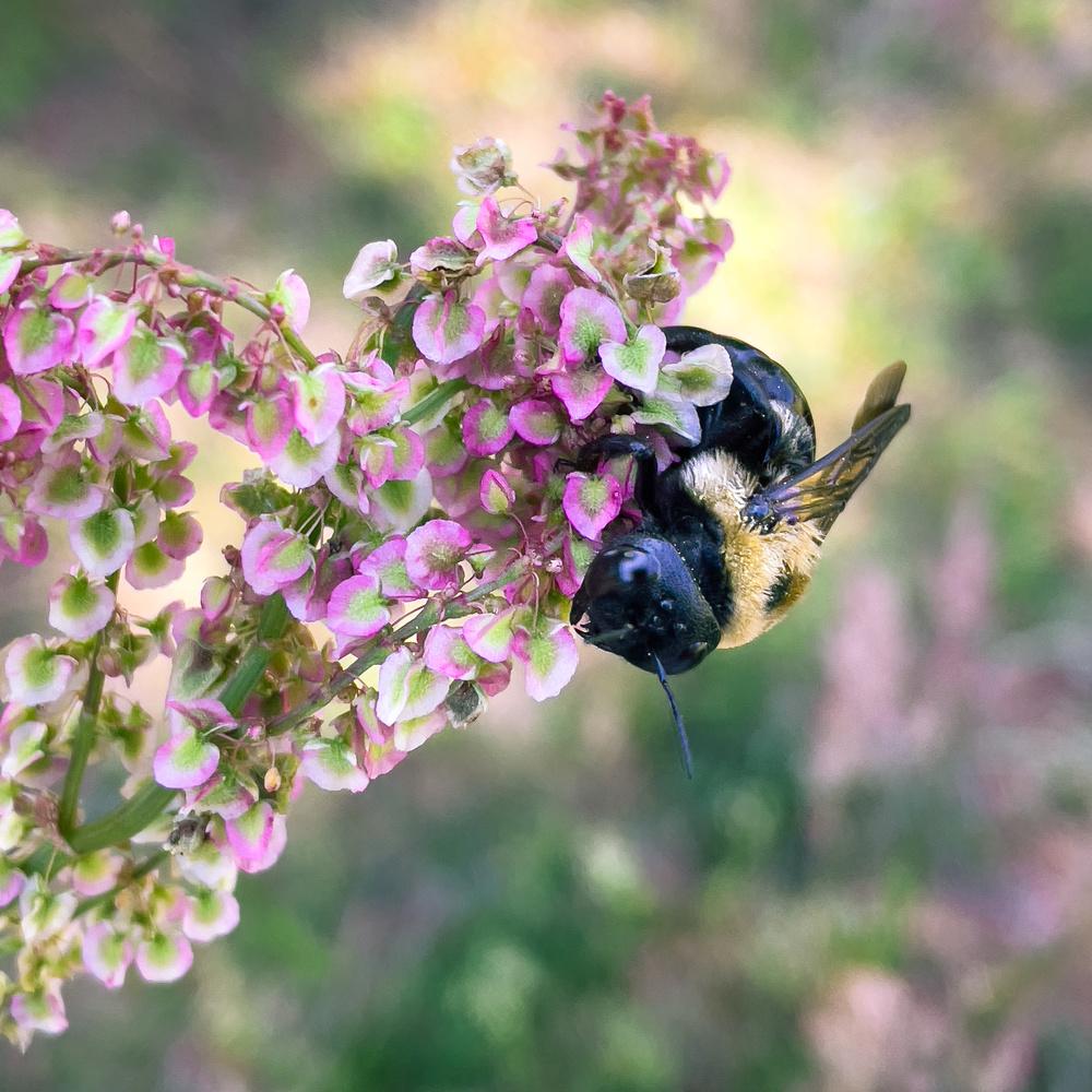 Beeutiful Spring by Logan Williams