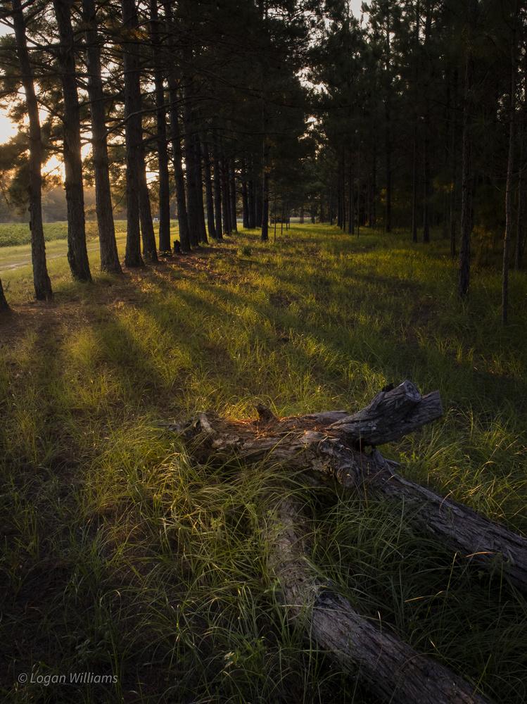 Life through Light by Logan Williams