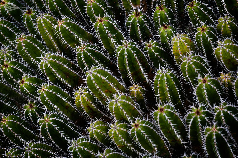 Cacti by Roberto Benis