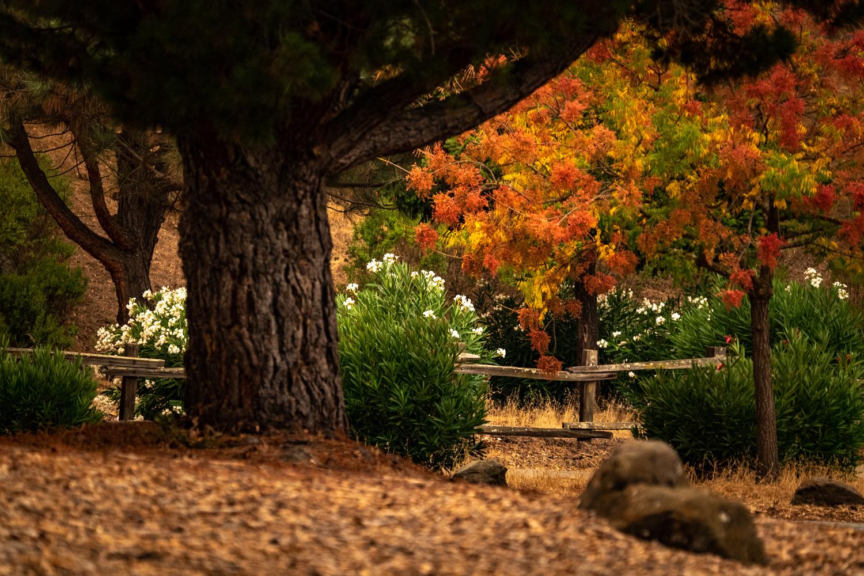 Ed Levin Park, Milpitas, CA by CARLOS GARCIA