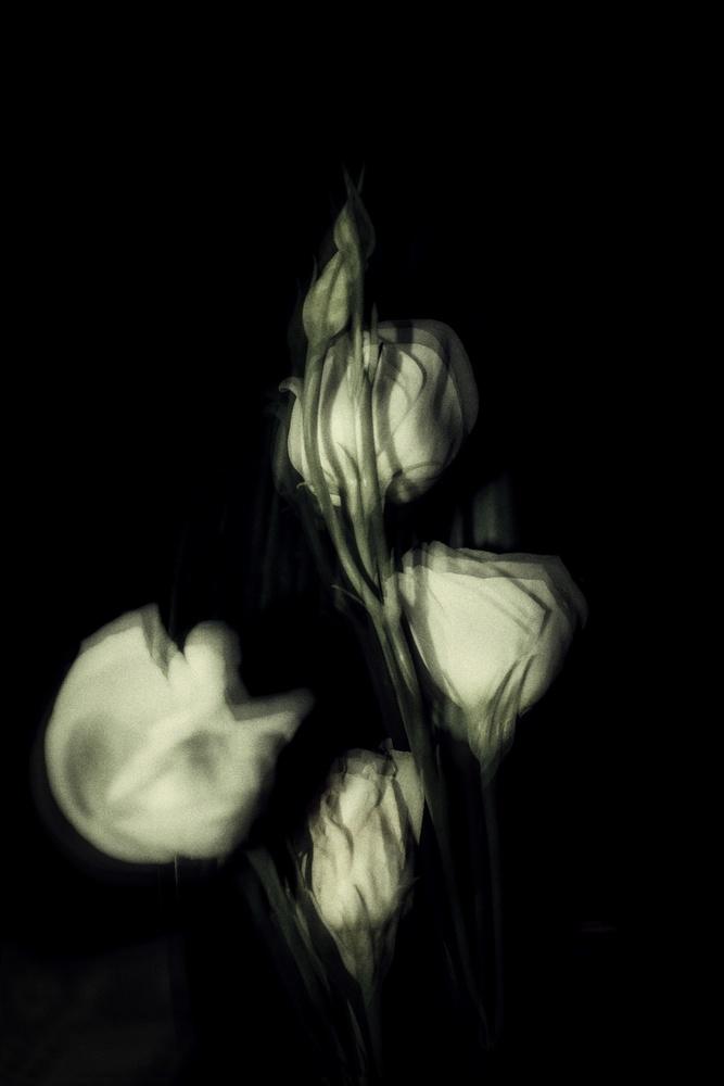 White Flowers by Antonella Di Mattei
