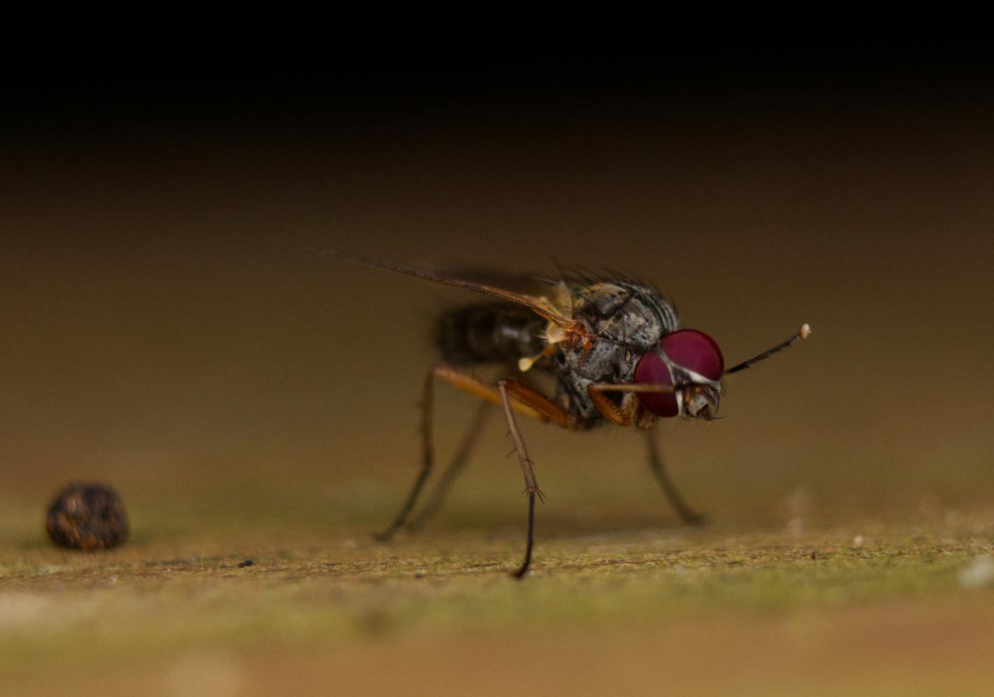 Dabbing Fly by Brett Ridings