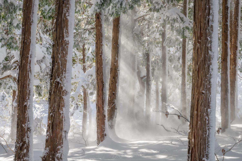 The snow makes light by Sho Hoshino