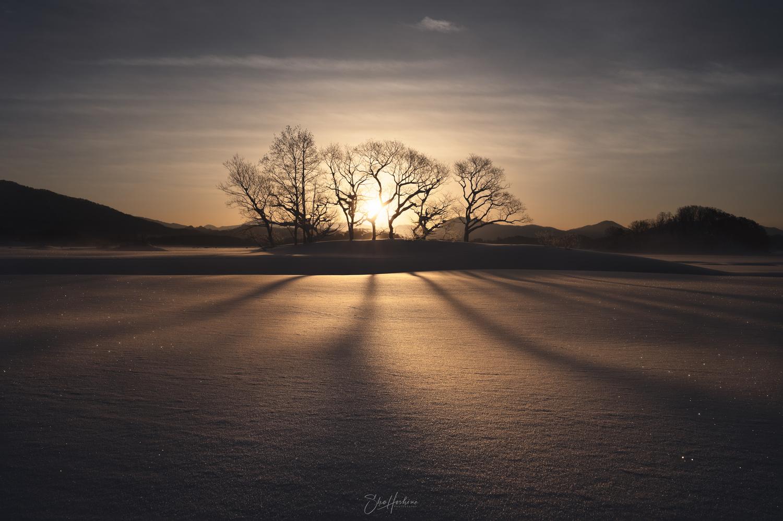 Shadow of trees by Sho Hoshino