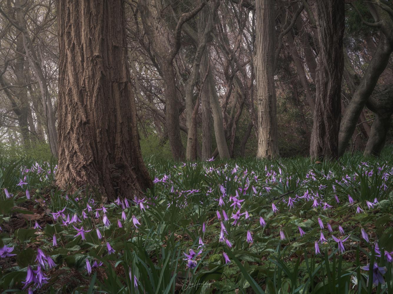 Katakuri Forest by Sho Hoshino