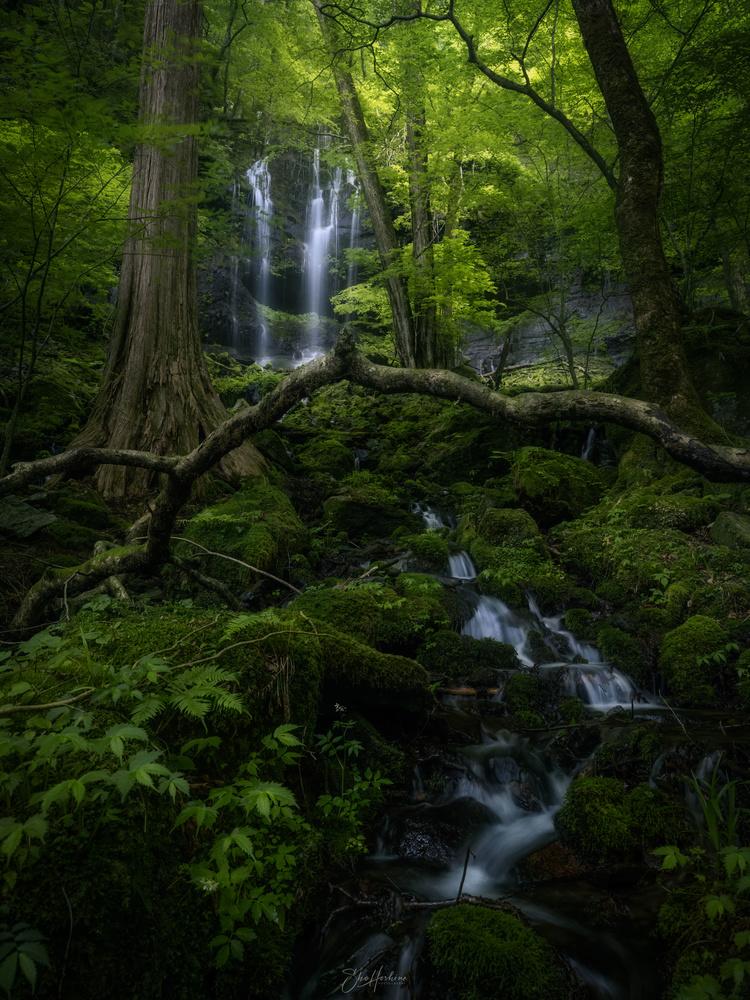 Mossy waterfall by Sho Hoshino