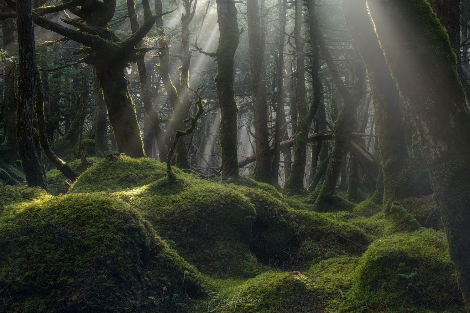 Moss forest by Sho Hoshino