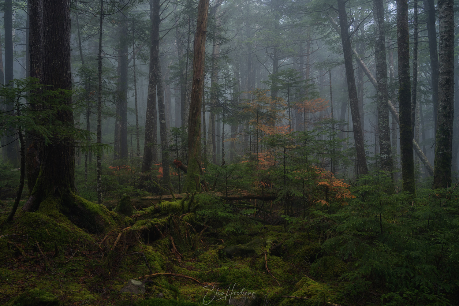 Forest art by Sho Hoshino