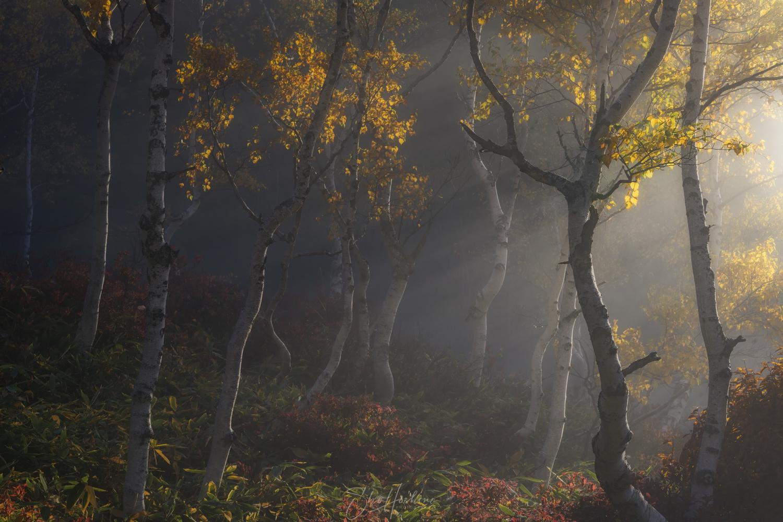 Light shines in autumn by Sho Hoshino