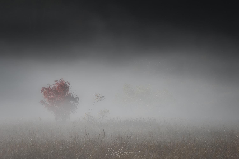 Tiny tree by Sho Hoshino