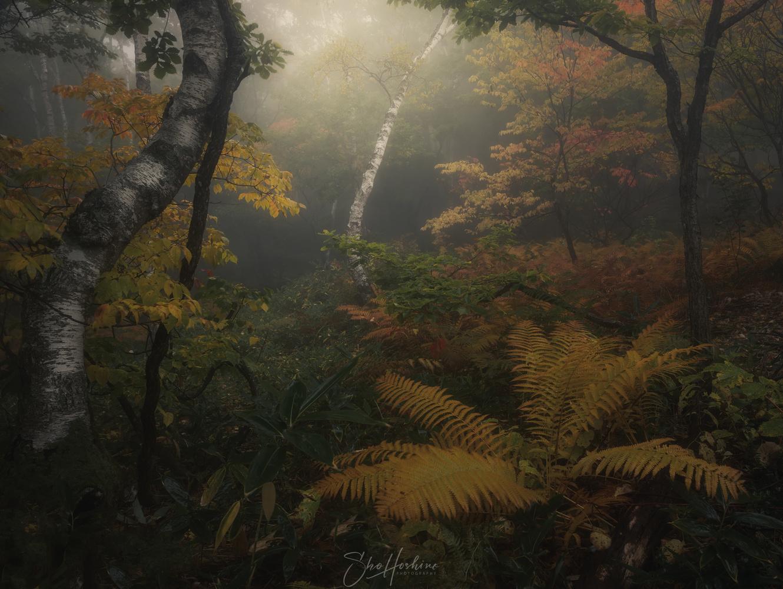 Fern forest by Sho Hoshino