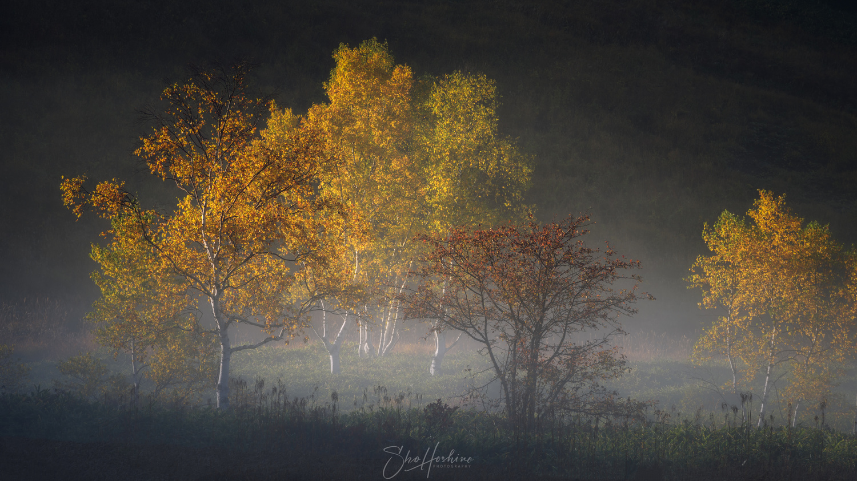 Autumn trees by Sho Hoshino
