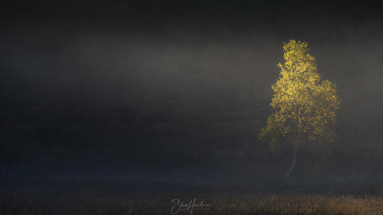 Autumn tree by Sho Hoshino