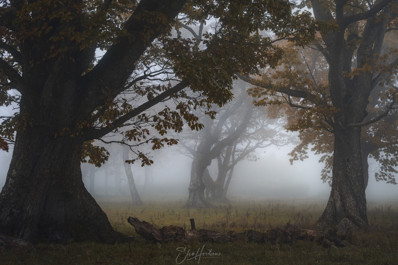 The fog goes through the trees by Sho Hoshino