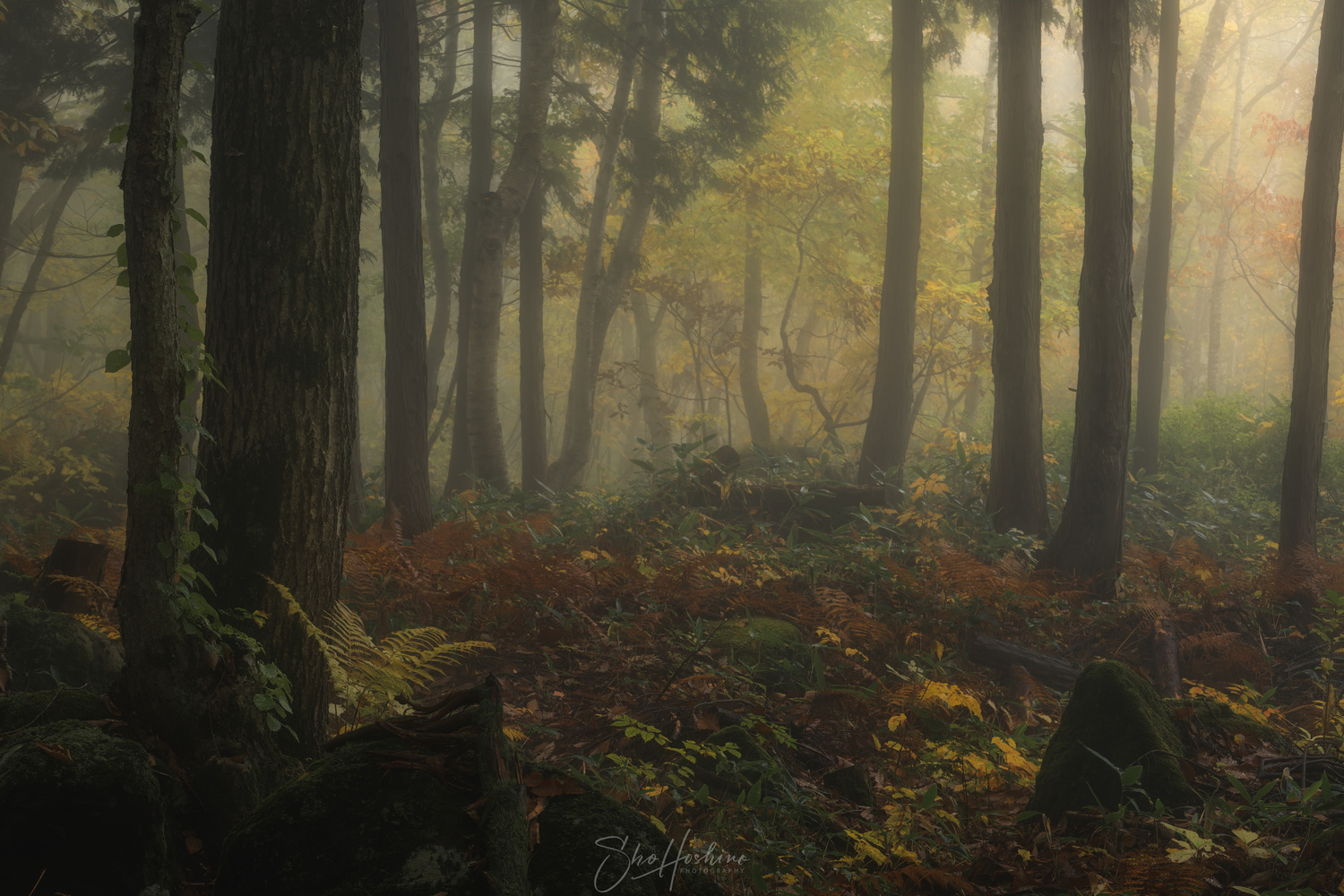 Dreamy forest by Sho Hoshino