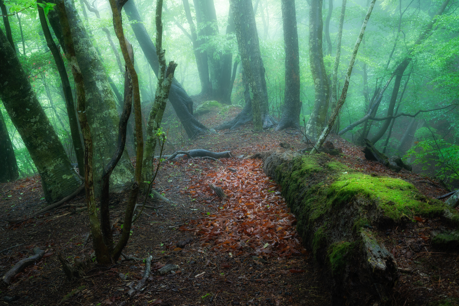 In the slightly bright forest by YNpics graph