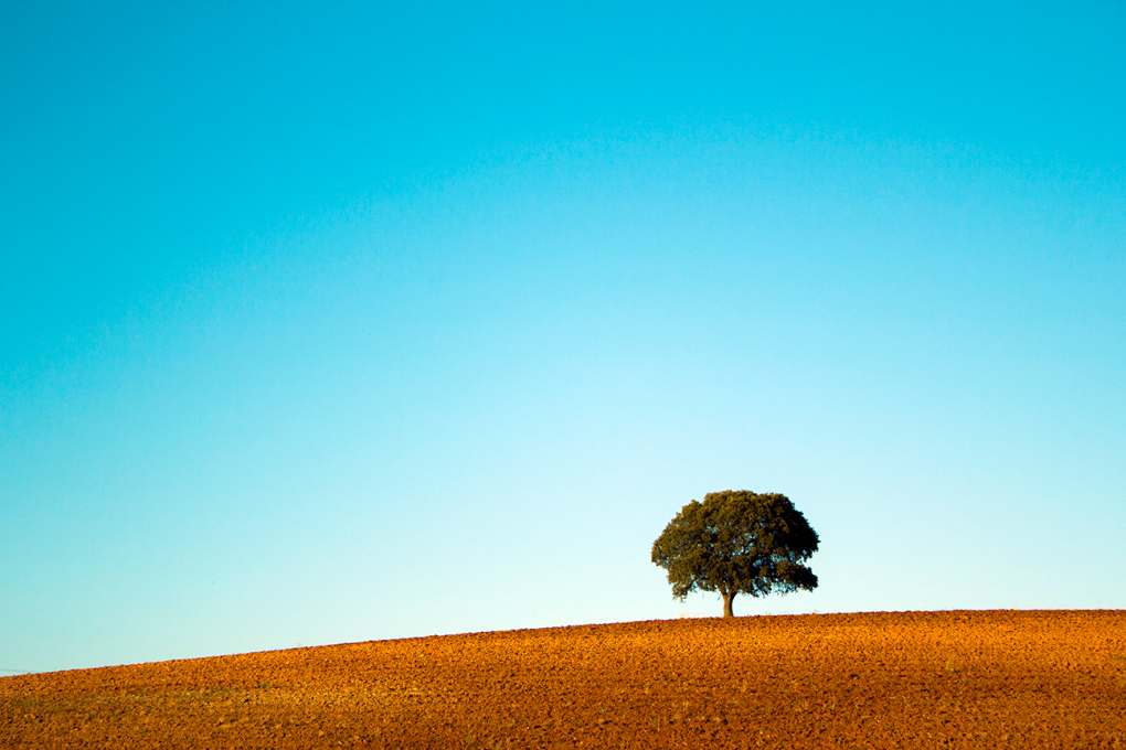 Lone Tree by Hillary Fox