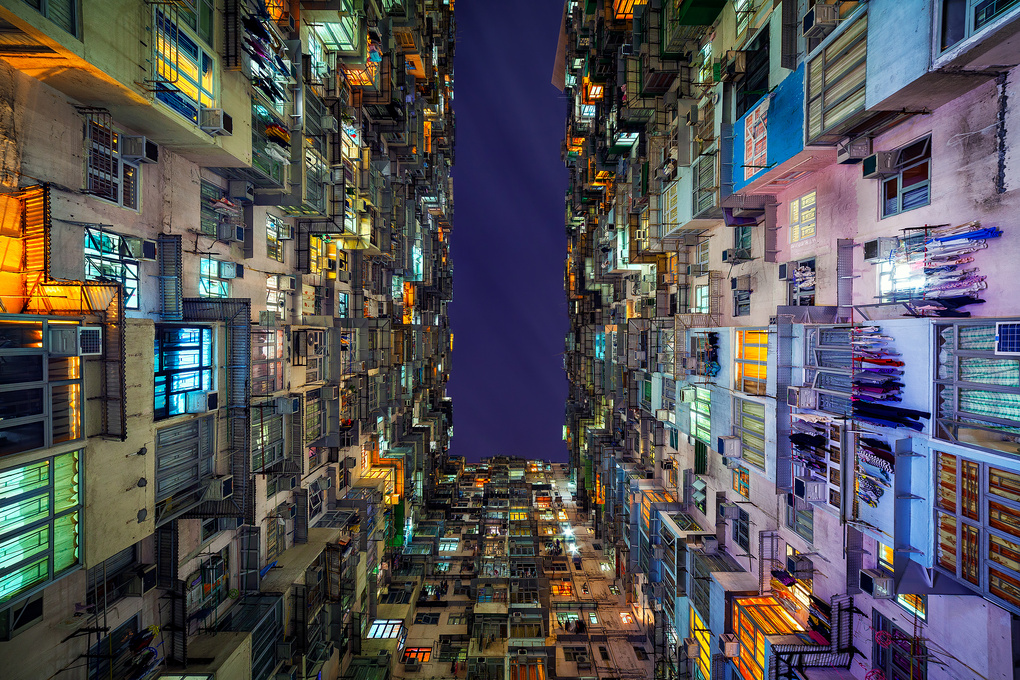 The Grid by Peter Stewart