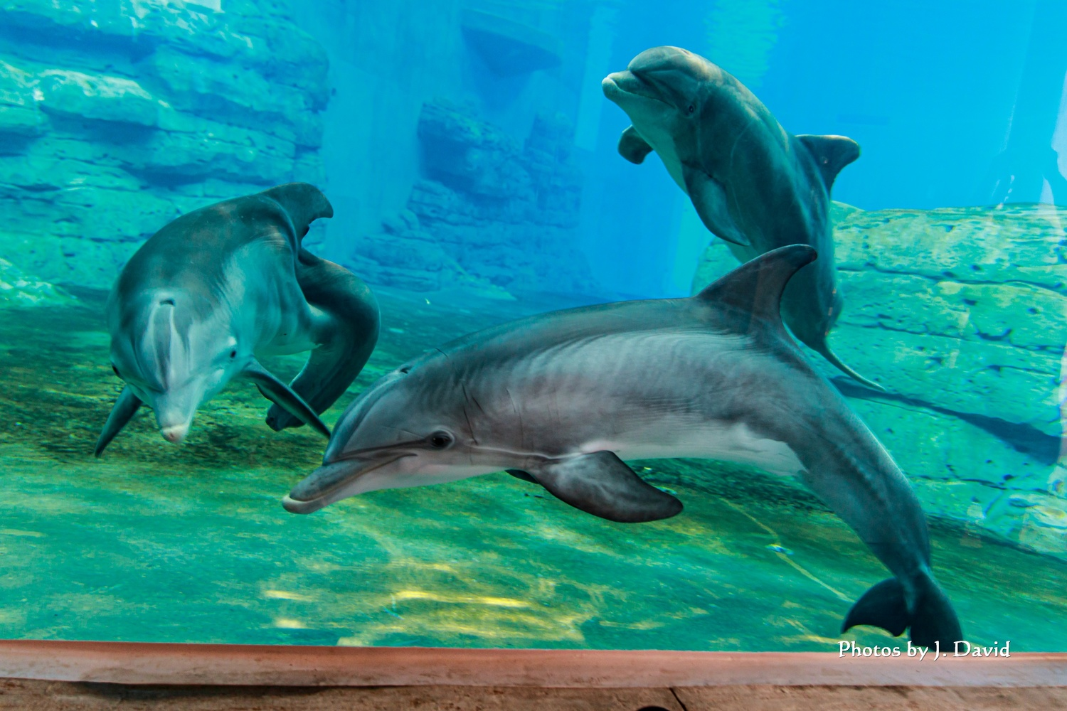 Winter and her friends in their new home by Dave Wright