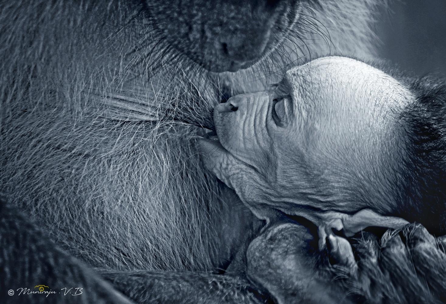 The mother by Muniraju VB