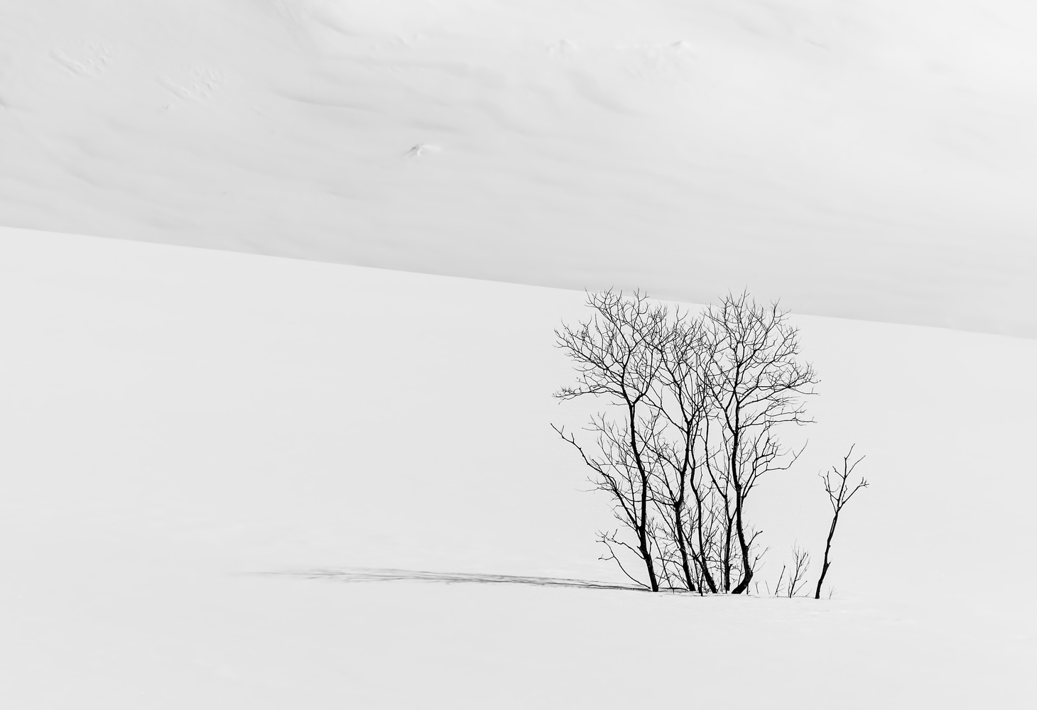 Mountain Pass lone tree by Heather Langlois