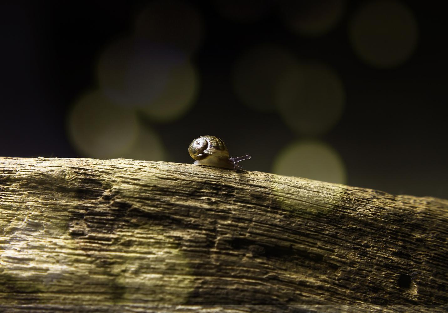 Little Snail by Ricardo Sanchez Ruiz
