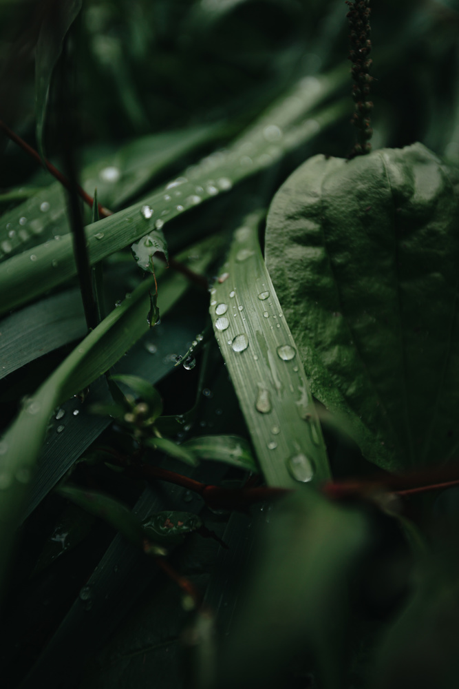 The rain drops over the leaves by Ave Calvar Martinez
