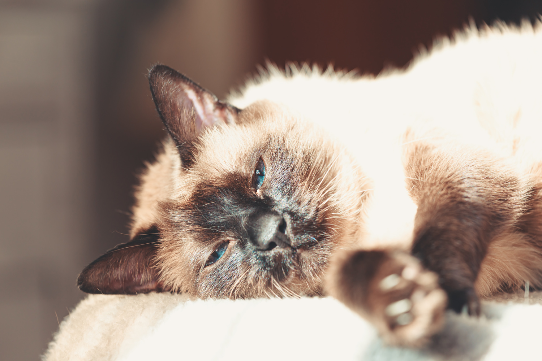 Sleepy cat by Ave Calvar Martinez
