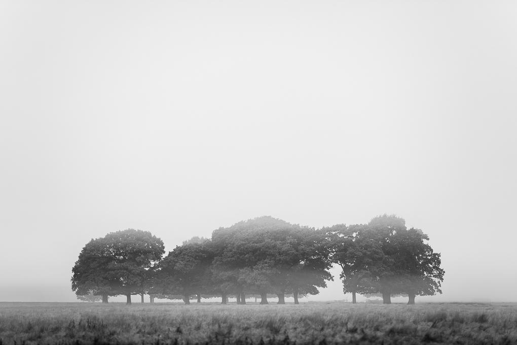 Lonesome  by Max Bridge