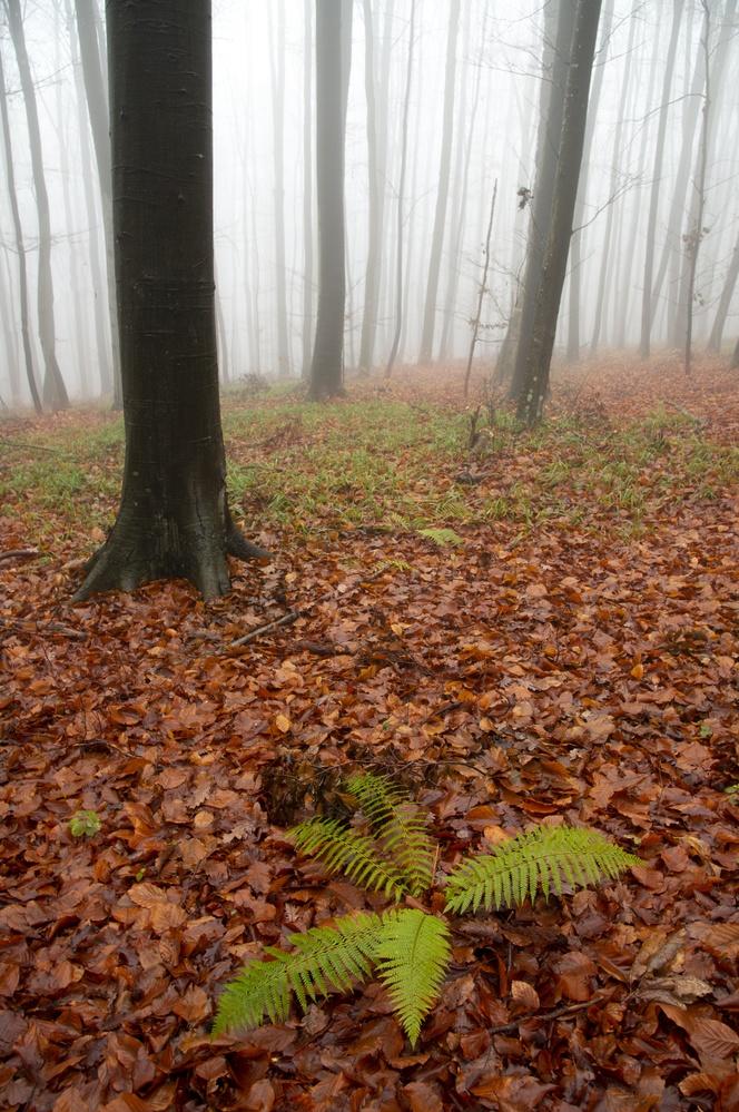 Fog by Ilija Stanusic