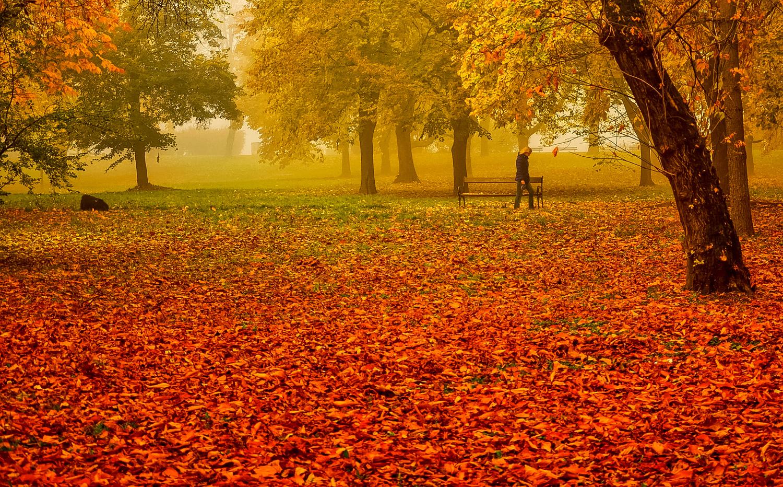 Autumn colors by Ilija Stanusic