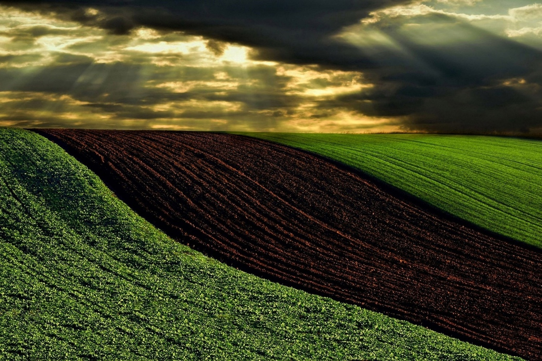 Fields by Ilija Stanusic