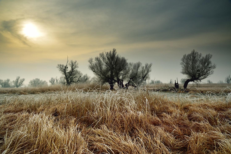 Winter sun by Ilija Stanusic