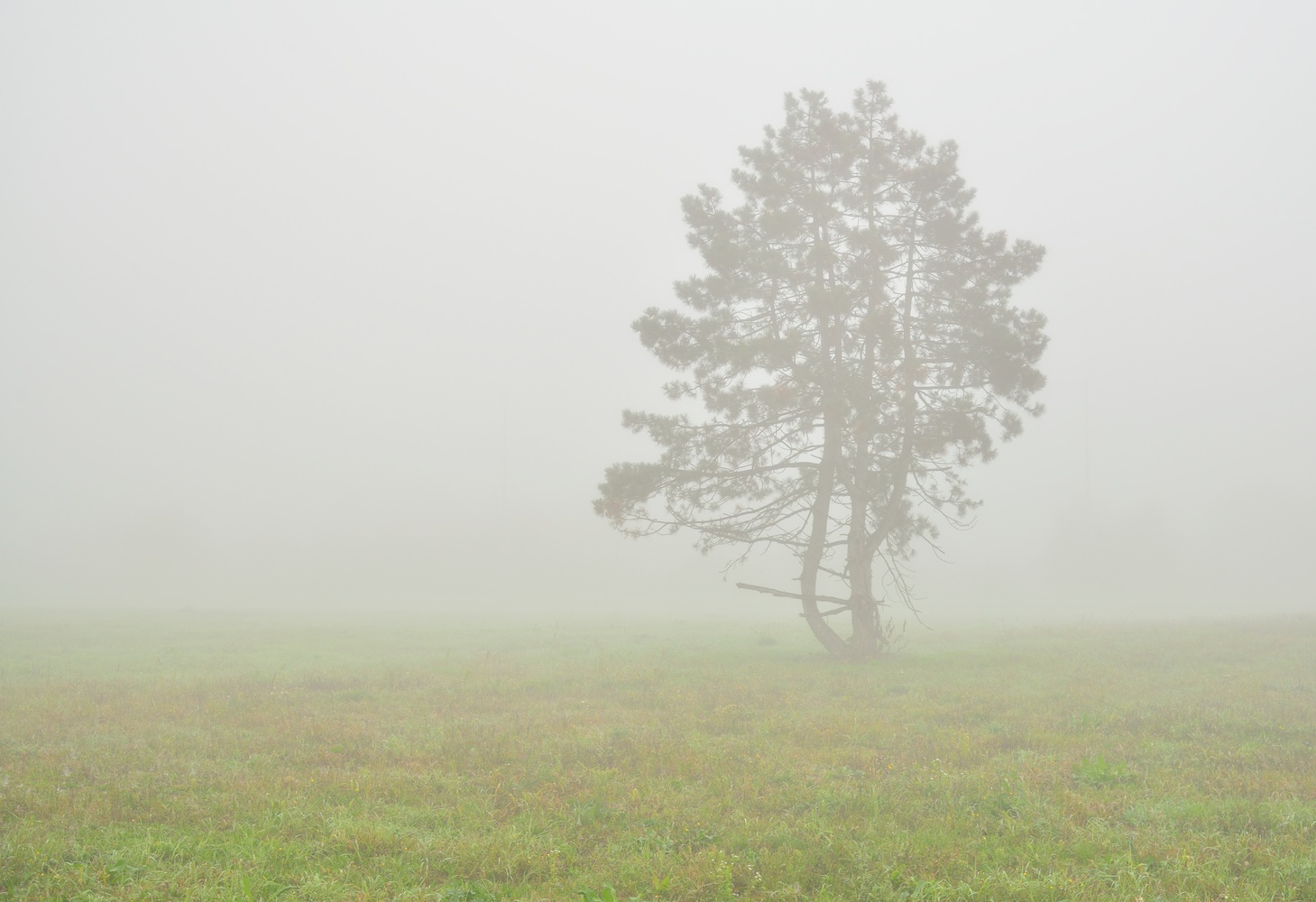 Tree by Ilija Stanusic